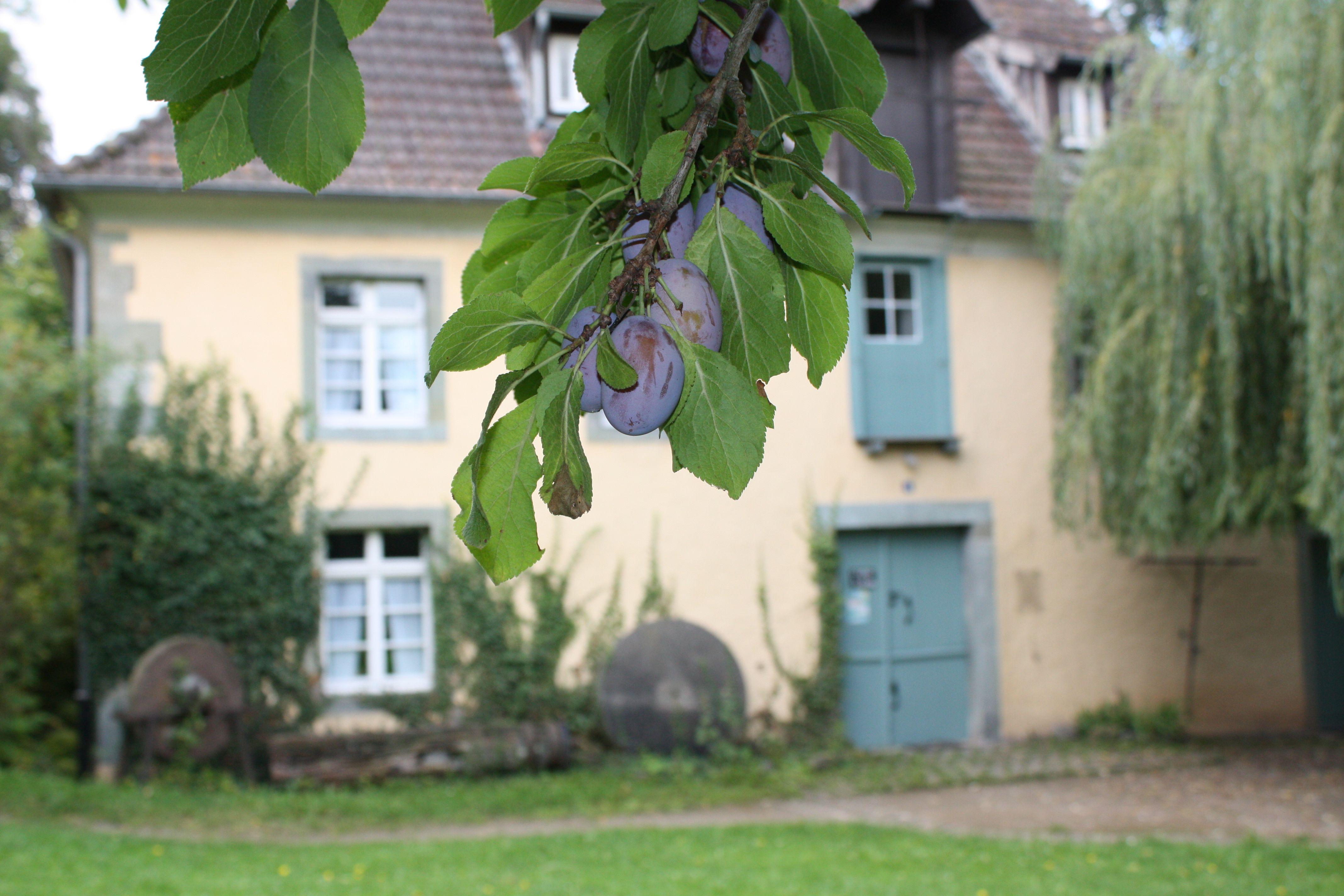 Schäferkämper Wassermühle 3